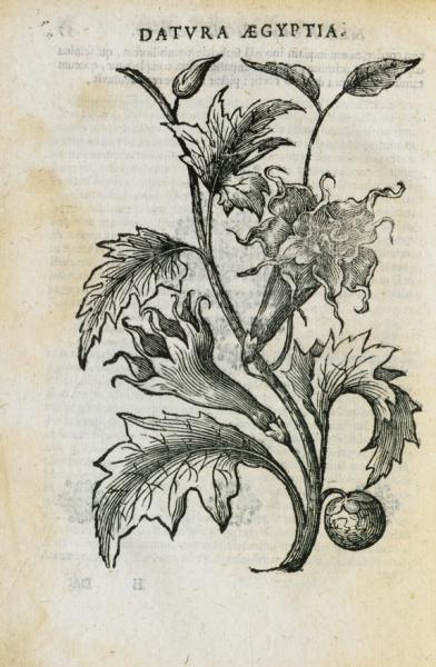 http://www.laurie-dallava.com/files/gimgs/11_alpino-prospero-prosperi-alpini-de-plantis-aegypti-liber-cum-observationibus-et-notis-ioannis-veslingii-mindani-equitis-edition---patavii-mdcxl-typis-pauli-frambotti-bibliopolae-sup-permissu-1640.jpg