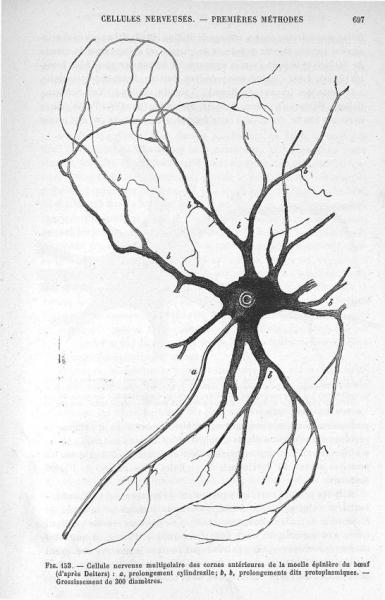 http://www.laurie-dallava.com/files/gimgs/11_anvier-louis-antoine---cornil-victor-andre-ouvrage---manuel-dhistologie-pathologique-par-v-cornil-et-l-ranvier-avec-la-collaboration-de-mm-a-brault-m-letulle-tome-2-edition---paris---f-alcan-1902.jpg