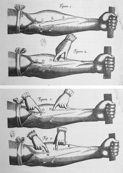 http://www.laurie-dallava.com/files/gimgs/11_demonstration-de-la-circulation-exercitatio-anatomica-de-motu-cordis-william-harvey-g-fitzer-francfort-sur-le-main-1628-bium-paris.jpg