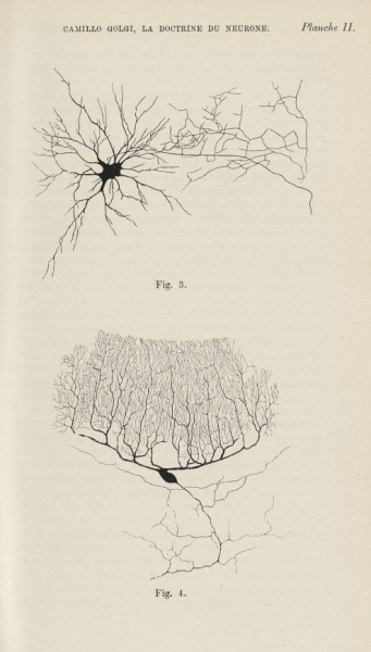 http://www.laurie-dallava.com/files/gimgs/11_la-doctrine-du-neurone-theorie-et-faits-conference-nobel-faite-a-stockholm-le-12-decembre-1906-revue---nordisches-medizinisches-archiv-edition---stockholm---p-a-norstedt--soener-1907.jpg