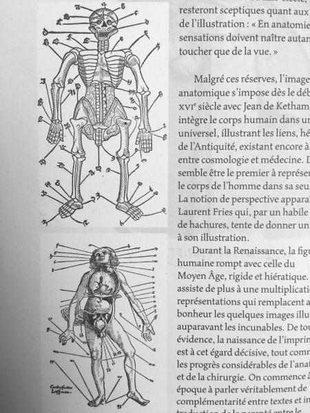 http://www.laurie-dallava.com/files/gimgs/11_le-squelette-humain-summula-jacobi-de-partibus-per-alphabetum-super-plurimis-remediis-ex-ipsius-mesue-libris-excerptis-jacques-despars-lyon-1500-1-des-plus-anciennes-representation-du-squelette-humain-spiegel-des-artzney-laurent-fries-1528-.jpg