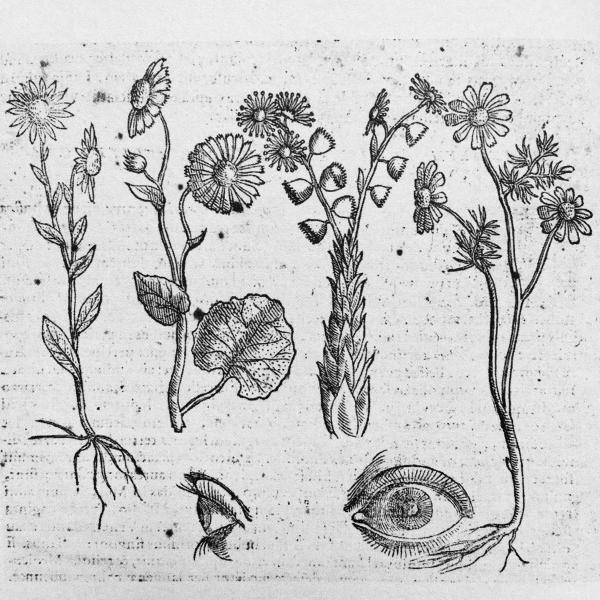 http://www.laurie-dallava.com/files/gimgs/11_loeil-et-les-fleurs-le-coeur-les-fruits-et-les-bulbes-phytognomonicaocto-libris-contenta-giambattista-della-porta-naples-h-salviani-1588.jpg