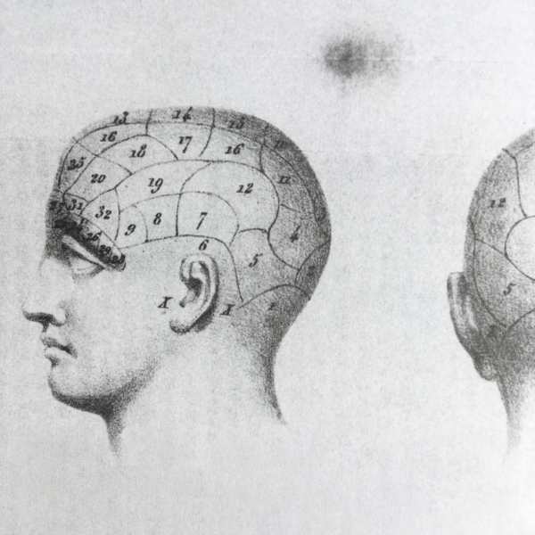 http://www.laurie-dallava.com/files/gimgs/11_planche-tiree-de-lecons-de-phrenologie-fj-broussais-bruxelles-societe-encyclopedique-des-sciences-medicales-1839.jpg