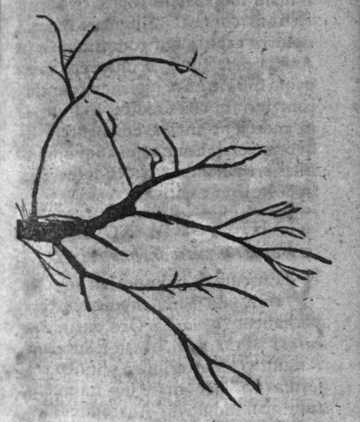 http://www.laurie-dallava.com/files/gimgs/11_ramuli-seu-venulae-capillares-mots-cles---anatomie-pneumologie--17e-siecle-auteur-de-louvrage---bartholin-thomas-ouvrage---historiarum-anatomicarum-rariorum-centuria-iii--iv-edition---copenhague---pierre-hack-1657.jpg