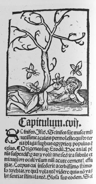 http://www.laurie-dallava.com/files/gimgs/11_vignette--ortus-sanitatis--jean-de-cuba-strasbourg-j-pruss-1499jjpg.jpg